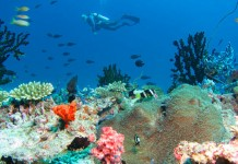 Diving in the Maldives is a popular activity.