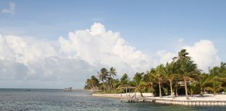 Palm trees lining a beach on Ambergris Caye.